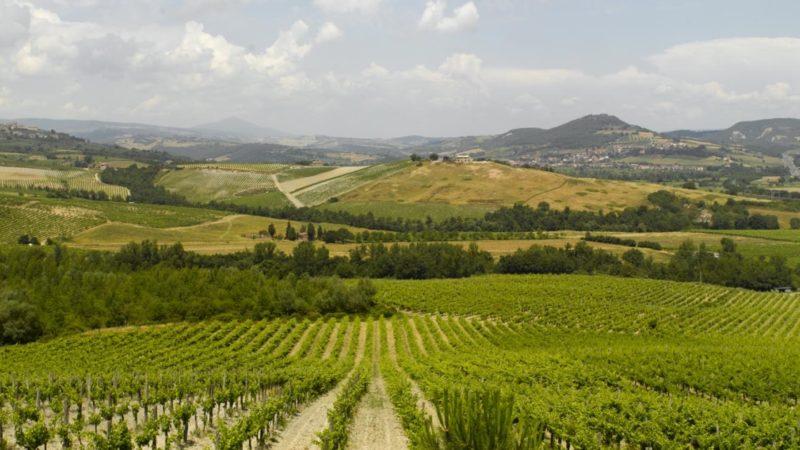 cantine-tour-orvieto